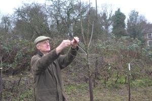 David considers where to prune on a Bramley