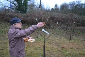 Jenny putting cider-soaked toast in the apple trees