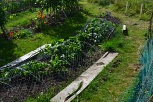 Spinach under mesh