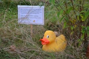 Doreen Duck's trail