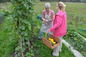picking beans and courgettes