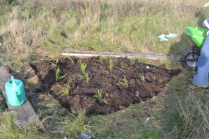 We have been creating new beds for perennials, such as asparagus