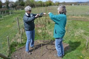 Sue & Lynn weaving a bean support near the gate