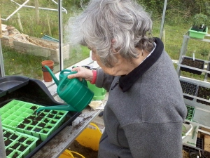 helen sowing sweetcorn
