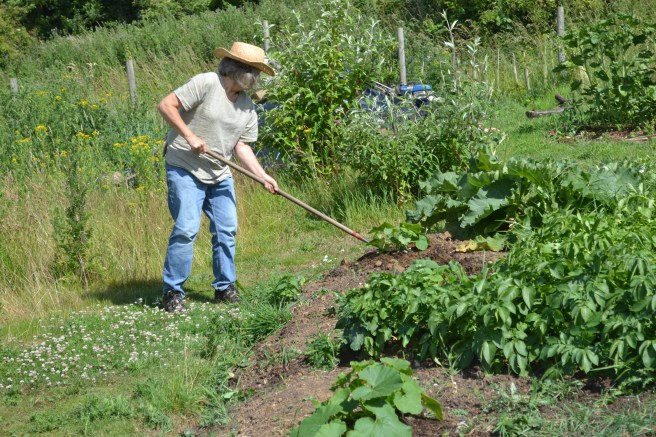 Sue digging potatoes