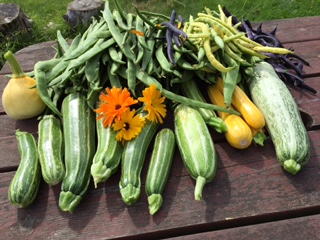 sue summer veg